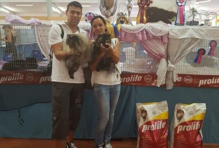 Esposizione Internazionale Felina Longarone 2017