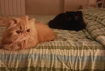 Electra e Aida